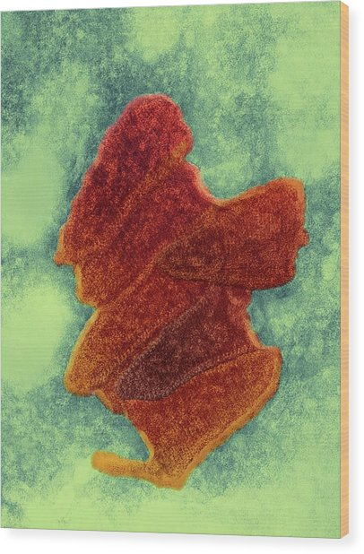 Bovine Ephemeral Fever Virus Wood Print by Ami Images