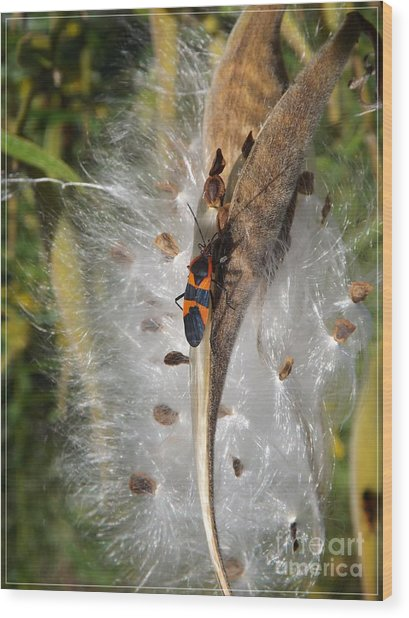 Boxelder On Butterfly Milkweed 2 Wood Print