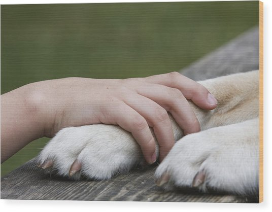 Boy's Hand Resting On His Dog's Paw Wood Print by Compassionate Eye Foundation/Jetta Productions