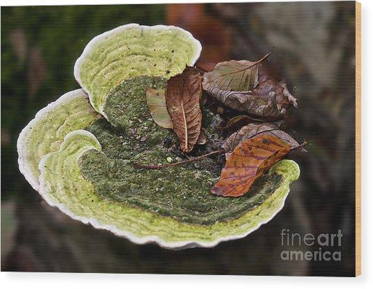 Bracket Fungi  Wood Print