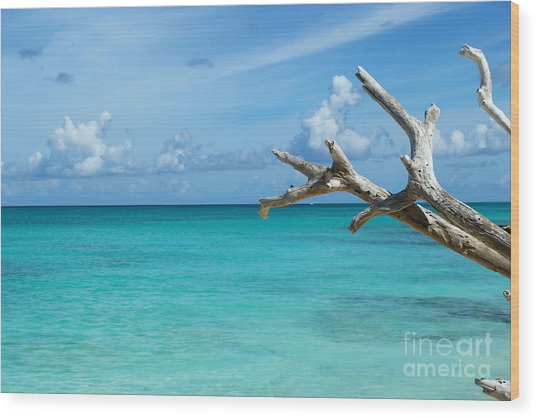 Branch Over The Caribbean Wood Print