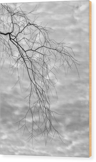 Branches And Clouds Wood Print by Robert Ullmann