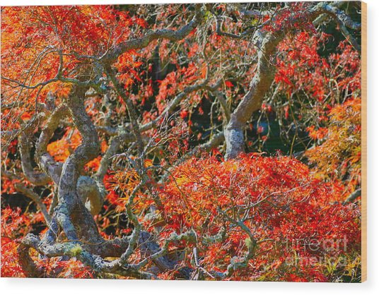 Branches Of Color Wood Print