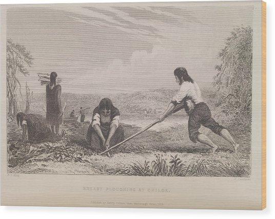 Breast Ploughing At Chiloe Wood Print