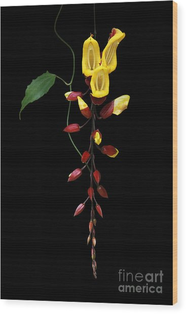 Brick And Butter Vine Wood Print