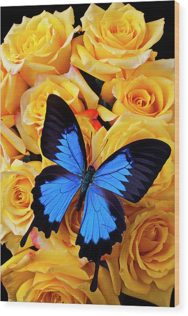 Bright Blue Butterfly On Yellow Roses Wood Print