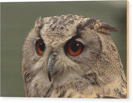 Bright Eyed Eagle Owl  Wood Print by Simon Gregory