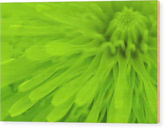 Bright Lime Green Dandelion Close Up Wood Print by Natalie Kinnear