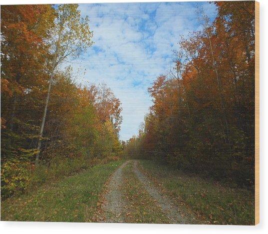 Bright Trail Wood Print