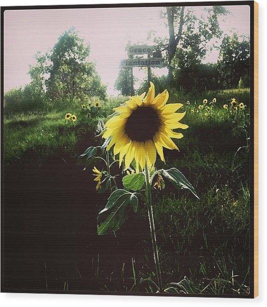 Brighten Your Day  Wood Print