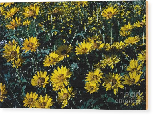 Brillant Flowers Full Of Sunshine. Wood Print by James Rabiolo