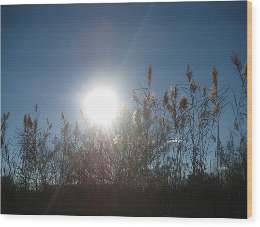 Brilliance In The Grasses Wood Print