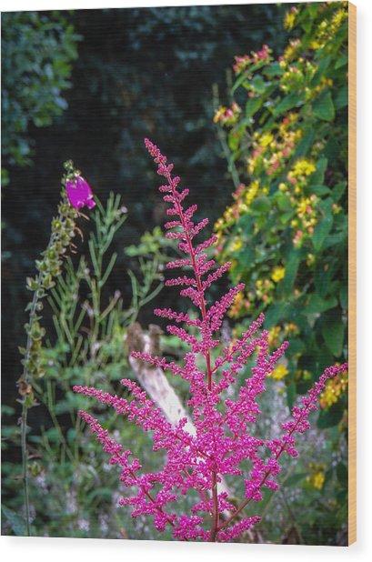 Brilliant Astilbe In Markree Castle Gardens Wood Print