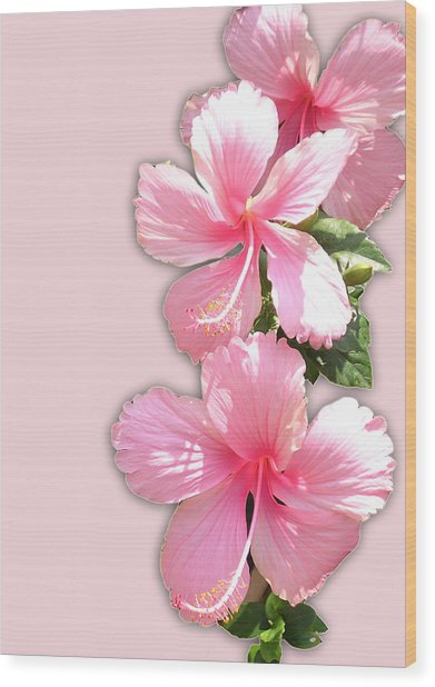 Brilliant Pink Hibiscuses Wood Print