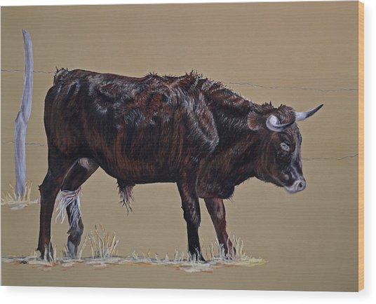 Brindle Steer Wood Print by Ann Marie Chaffin