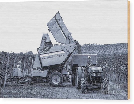 Bringing In The Grape Harvest Mechanically Wood Print