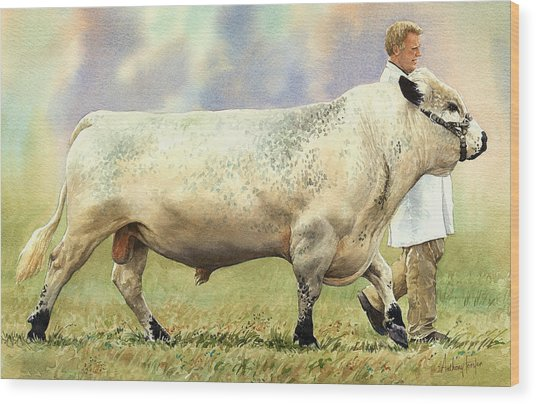 British White Bull Wood Print by Anthony Forster
