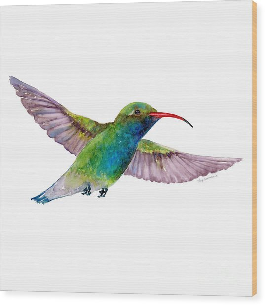Broad Billed Hummingbird Wood Print