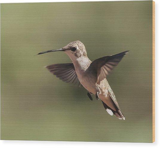 Broad-tailed Hummingbird 1 Wood Print