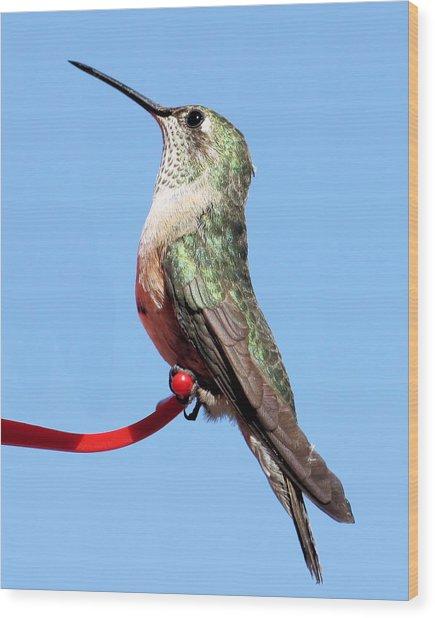 Broad-tailed Hummingbird Wood Print