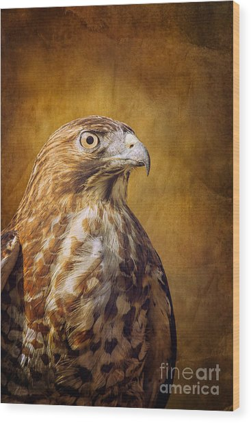 Broad Wing Hawk Wood Print by Todd Bielby