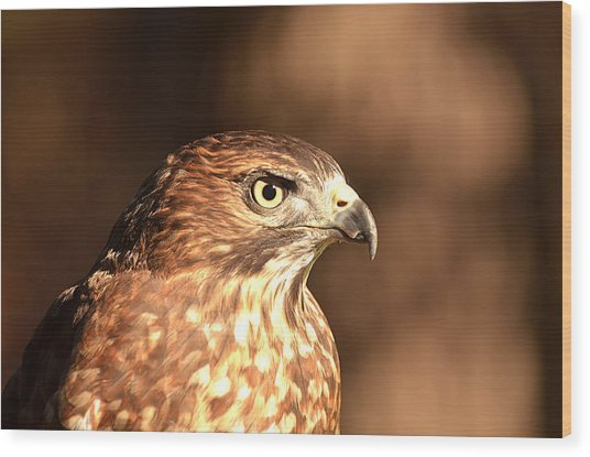 Broad-winged Hawk Wood Print