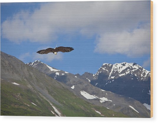 Broad Wings In The Mountains Wood Print by Tim Grams