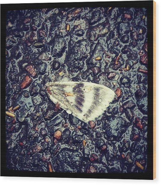 Broken Wood Print by Beth Burns