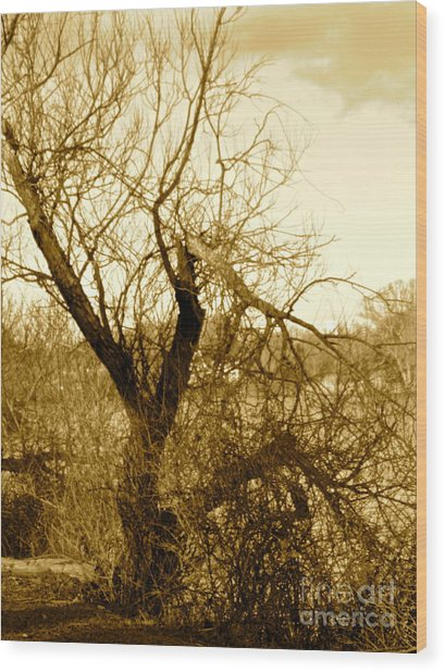 Broken But Beautiful Tree Wood Print by Q's House of Art ArtandFinePhotography