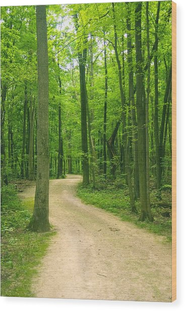 Broken Path Wood Print