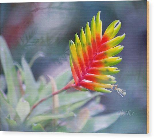 Bromeliad Beauty Wood Print