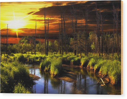 Brookstreet - Sunrise In The Forest Wood Print