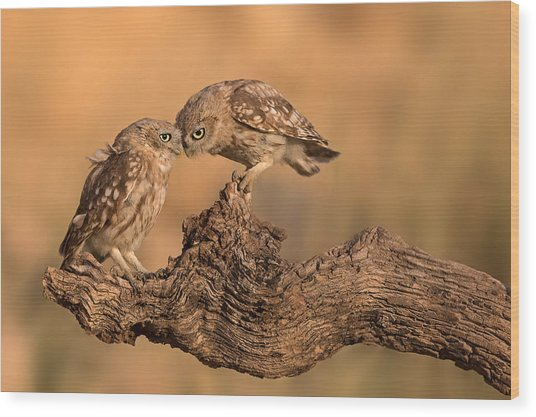 Brothers Forever Wood Print by Amnon Eichelberg