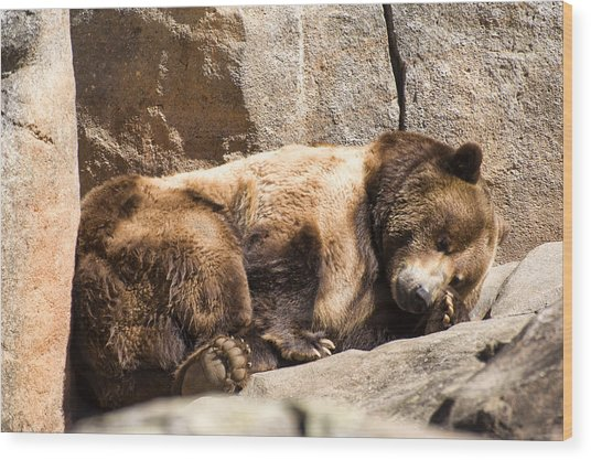 Brown Bear Asleep Again Wood Print