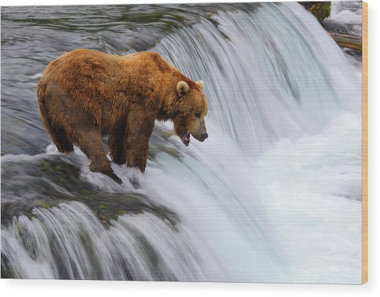 Brown Bear At Brooks Falls Wood Print by Naphat Photography