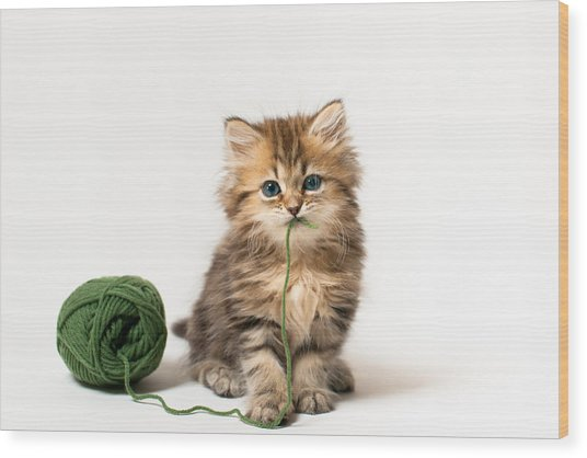 Brown Blue-eyed Kitten With Green Wool In Mouth Wood Print by Benjamin Torode