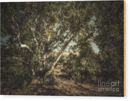 Brown Canyon Sycamore - Toned Wood Print by Al Andersen