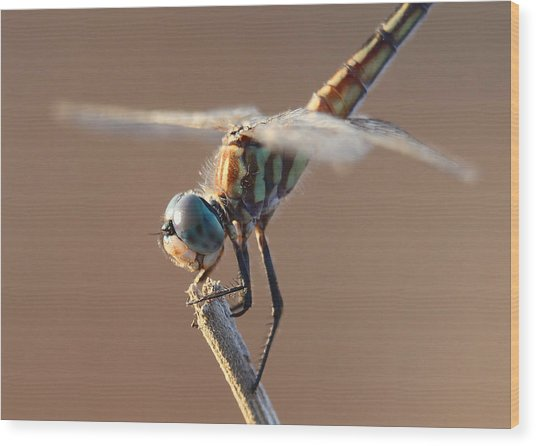 Brown Dragonfly Wood Print