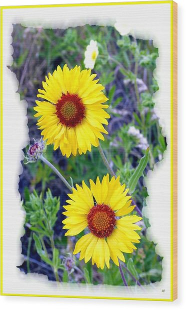Brown- Eyed Susans Wood Print