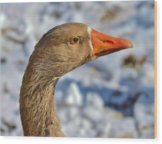 Brown Goose Wood Print by Thomas  MacPherson Jr