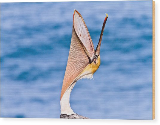 Brown Pelican - Head Throw Wood Print