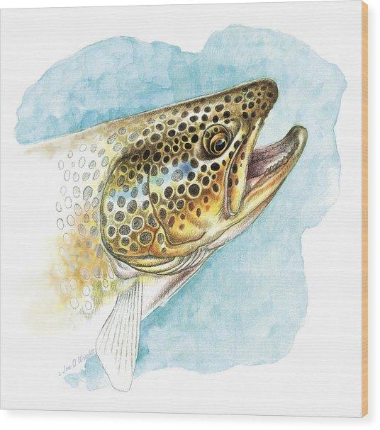 Brown Trout Study Wood Print