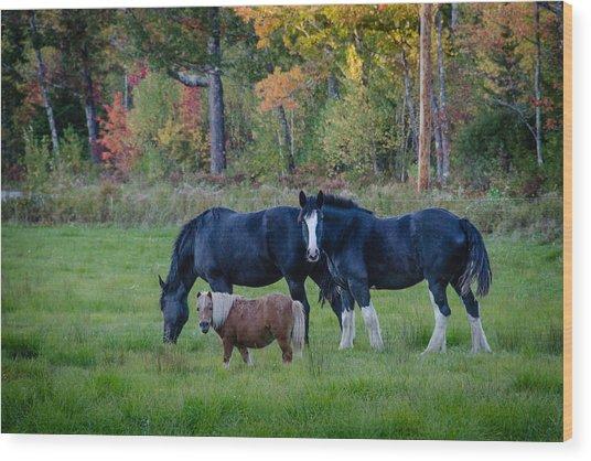 Brownfield Horses Wood Print