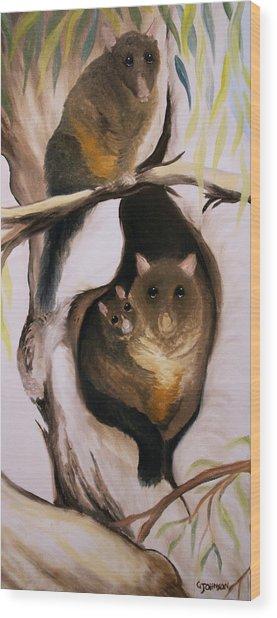 Brush Tail Possum Wood Print