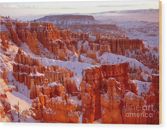 Bryce Canyon - 11 Wood Print
