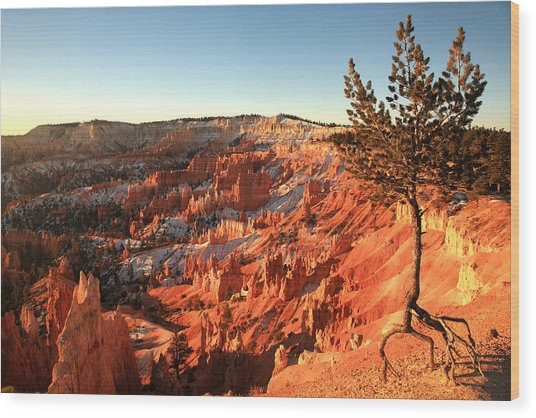 Bryce Canyon Wood Print by Darryl Wilkinson