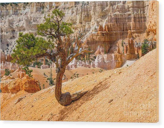 Bryce Canyon Np Wood Print