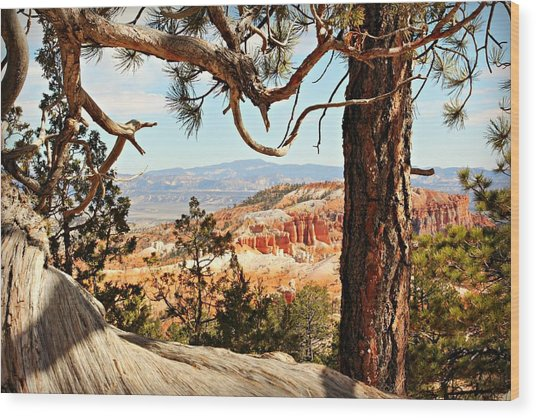 Bryce Canyon Through The Trees Wood Print