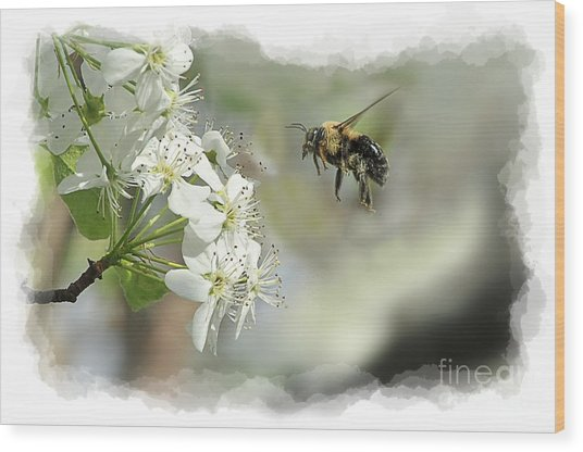 Bubble Bee Looking For Nectar Wood Print by Dan Friend