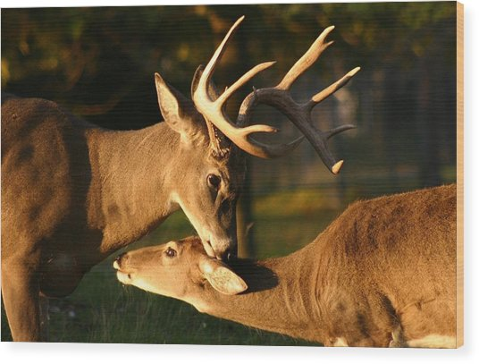Buck And Friend Wood Print